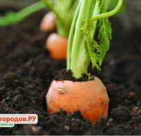 Все о сеялках: точного высева чеснока, моркови, свеклы для мотоблока