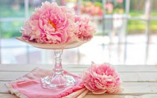 Как ухаживать за пионами после их цветения: чем подкормить и когда срезать пионы