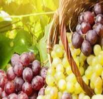 Совместимость винограда с другими растениями: что посадить рядом и что нельзя