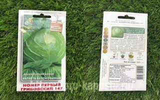 О Грибовской капусте: описание раннего сорта, особенности выращивания