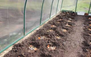 Что положить в лунку, когда сажать огурцы: какой должна стать почва