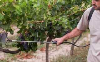 Чем опрыскивать виноград перед, во время и после цветения от болезней