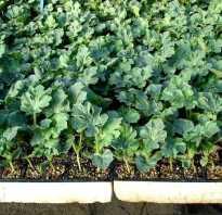 О выращивании арбузов на рассаду: посеять и вырастить в домашних условиях
