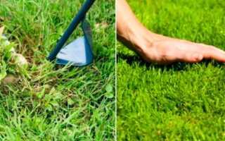 Сорта газона для посадки на дачном участке: описание, какие смеси лучше выбрать