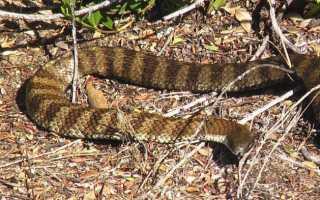 Отпугиватели змей: ультразвуковые, вибрационные, биологические, экоснайпер