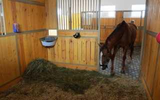 Разведение и размножение лошадей: случка кобылы и жеребца
