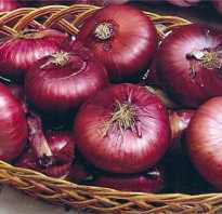Все о выращивании красного (ялтинского) лука: посев и уход за растением