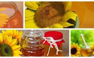 Мед подсолнечника: польза и вред, полезные свойства и противопоказания