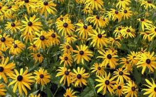 О желтых садовых цветах многолетниках: названия, описания и характеристики