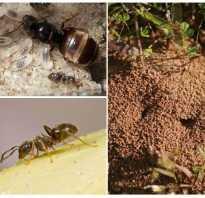 Все о способах борьбы с муравьями на дачном участке народными средствами