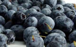 Голубика сорта: когда созревает, какой куст самый сладкий