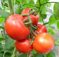 Ажур: описание сорта томата, характеристики помидоров f1, посев
