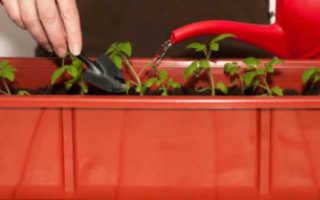 Как поливать рассаду помидор в домашних условиях: как часто, сколько раз
