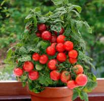 Бонсай: описание сорта томата, характеристики помидоров, посев