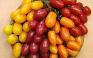 Финик желтый: описание сорта томата, характеристики помидоров, посев