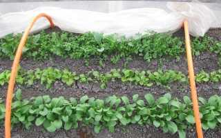 Как высадить редис ранней весной: посадка и уход в теплице без отопления