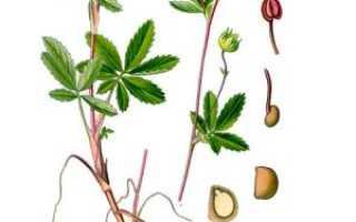 О траве сабельник: как выглядит, полезные свойства растения, где применяется