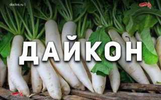 Японская редька Дайкон: описание сорта, характеристики, агротехника