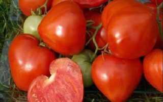 Утренняя роса: описание сорта томата, характеристики помидоров, посев