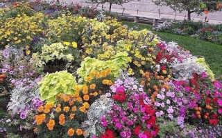О посадке цветов под зиму семенами в открытый грунт, дальнейший уход