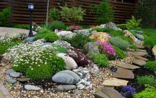 О цветах многолетних для альпийской горки и клумбе из камней своими руками