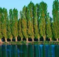 Все о влаголюбивых плодовых деревьях и кустарниках для дачного участка