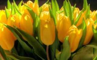 О цветах тюльпанах: как выглядят, описание (тюльпаны в ландшафтном дизайне)
