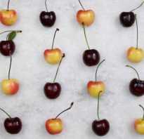 В чем отличие вишни от черешни: разница саженца, дерева, листа, плода