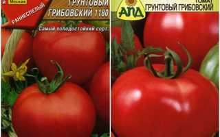 О томате Грибовский: описание сорта, характеристики помидоров, посев