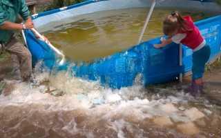 О поливе растений водой из бассейна с перекисью водорода: можно ли с хлоркой