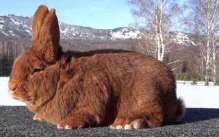 О разведении кроликов: выгодно ли, как правильно выращивать для начинающих