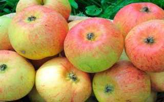 О яблоне Коробовка: описание сорта, характеристики, агротехника, выращивание