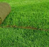 Все о рулонном газоне: вес, ширина, сколько в рулоне квадратных метров