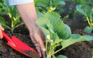 Подкормка капусты при посадке, что добавлять в лунку для хорошего роста
