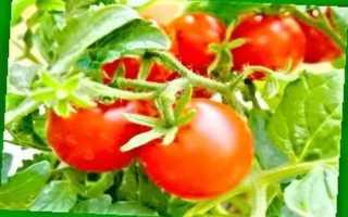 Томат Татьяна: описание сорта томата, характеристики помидоров, посев