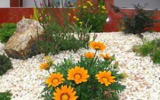 Как посадить газанию в открытый грунт: способы выращивания растения из семян