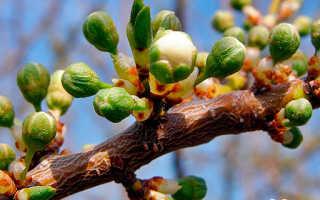 Все о периоде вегетации у плодовых деревьев: что это, описание, характеристики