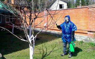 Все о болезнях плодовых деревьев: какие бывают, средства борьбы с болезнями