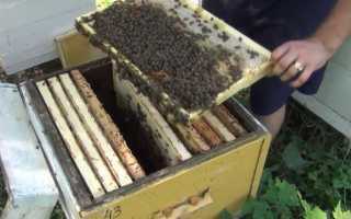 Об обработке пчел от клеща осенью и летом, лекарства, методы борьбы, препараты