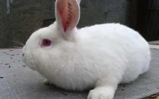 Чем кормить кроликов для быстрого роста и веса: что лучше для набора, стимуляторы