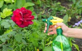 Средства обработки от тли на розах: как бороться с зелеными жучками