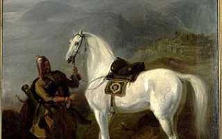 Лошадь кабардинской породы: кабардинский конь один из самых старейших в мире