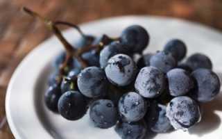 О винограде Русский Конкорд: описание и характеристики сорта, посадка и уход