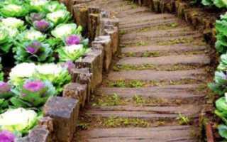 Все о выращивании декоративной капусты: как посадить и ухаживать за культурой