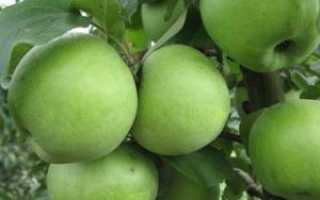 О яблоках Семеренко: описание и характеристики сорта, выращивание саженцев