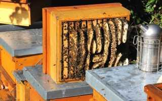 Когда собирать мед: в каком месяце, время сбора меда на Алтае, сезон меда