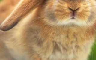 Как ухаживают за кроликом в домашних условиях и чем кормят: как правильно