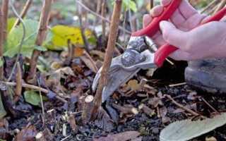 Чем мульчировать малину: можно ли сыпать опилки, хвойные иголки