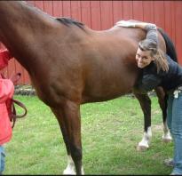 В чем отличие мерина от жеребца: как называется кастрированный конь