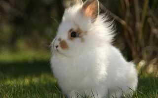 Сколько живет кролик: продолжительность жизни обычного и декоративного кроликов